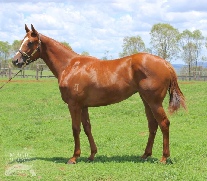 Thurlow filly